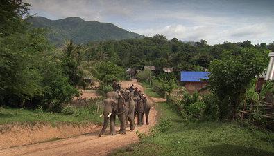 Theos Tierwelt Elefante